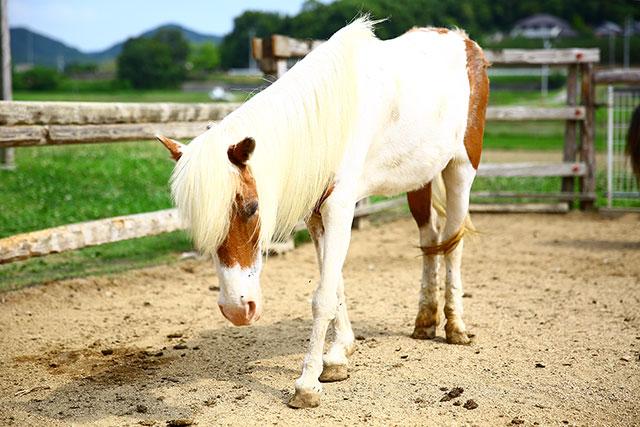 うしおじさん-白馬2.jpg